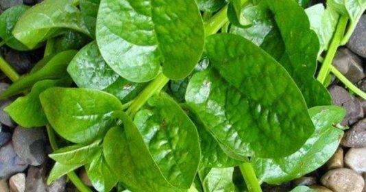 6 loại rau củ ít thuốc trừ sâu, mẹ có thể yên tâm cho con ăn dặm
